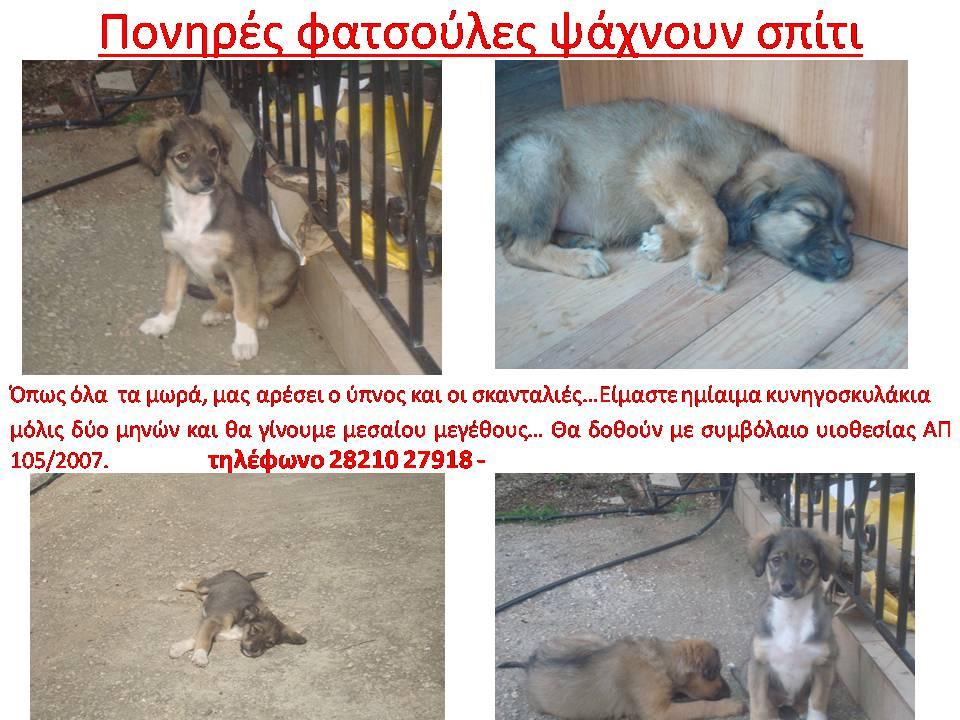 puppies_akrwtiri