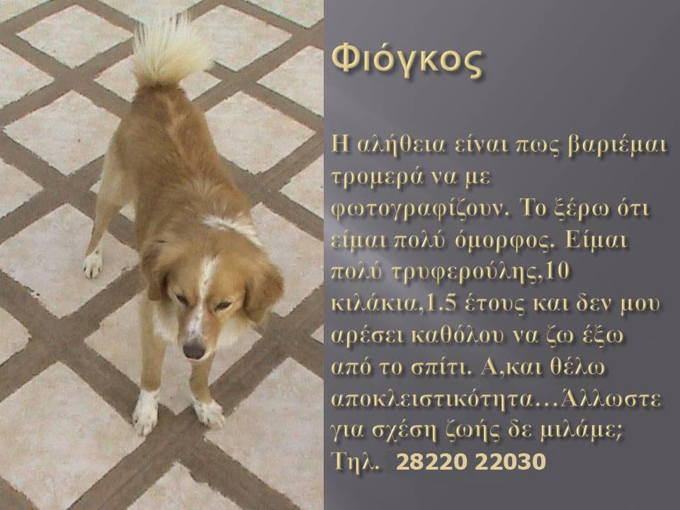 fiogkos1