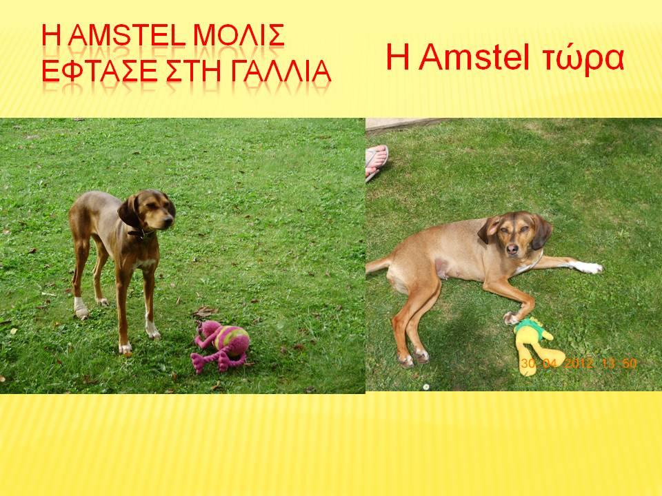 H_Amstel____