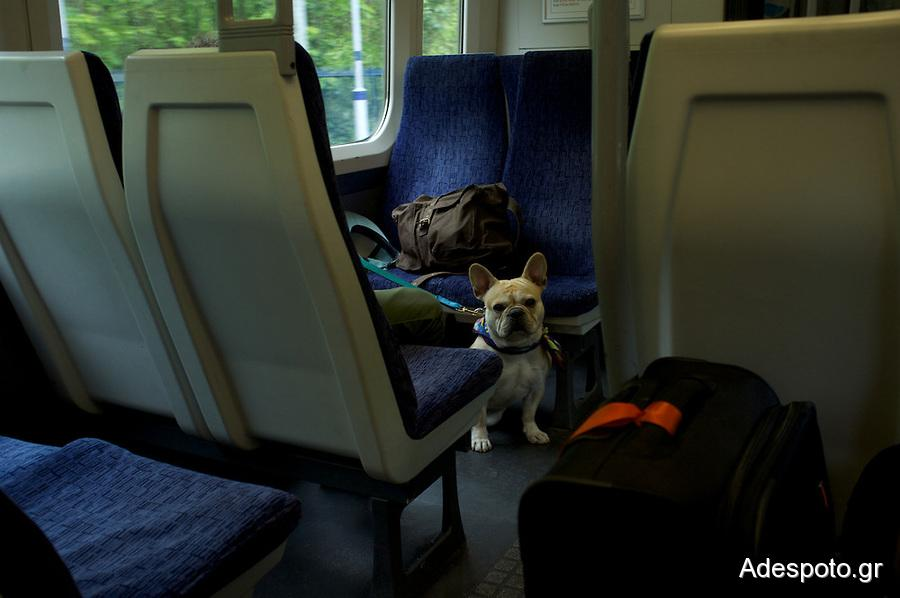 dog-on-train-London
