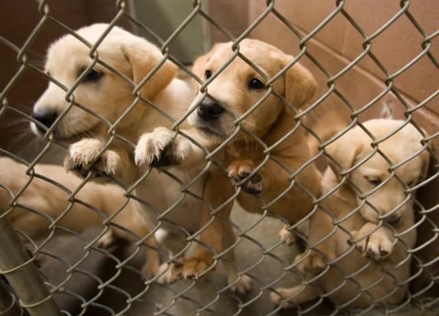 puppymils1