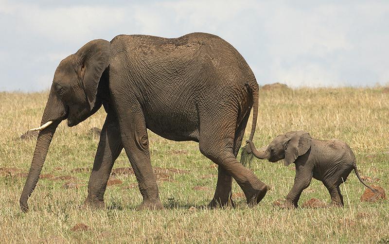 baby-elephant-protect-wildlife
