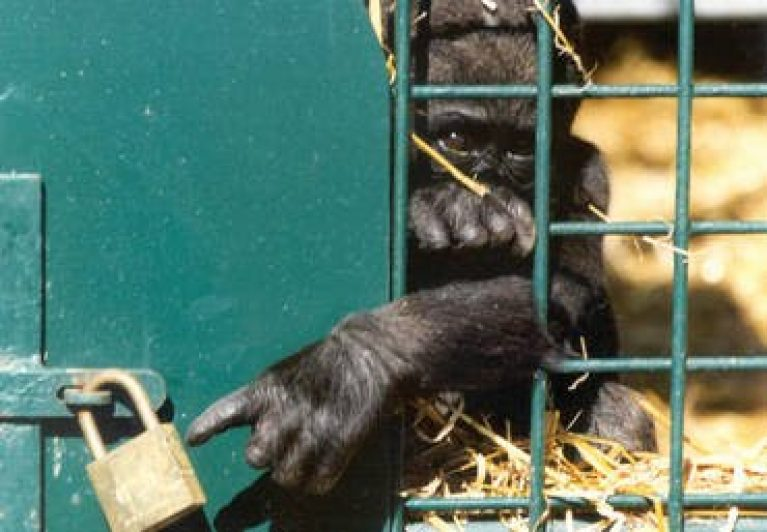 zoo_animals_in_cages_8