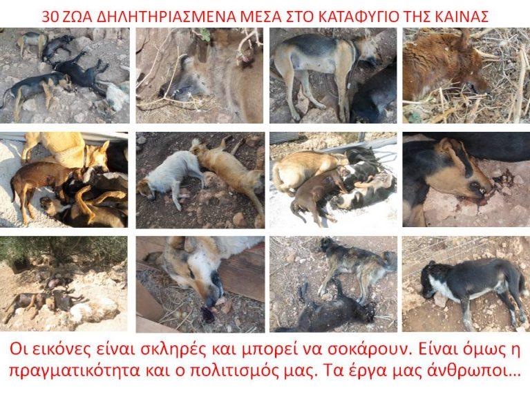 kaina_kollaz