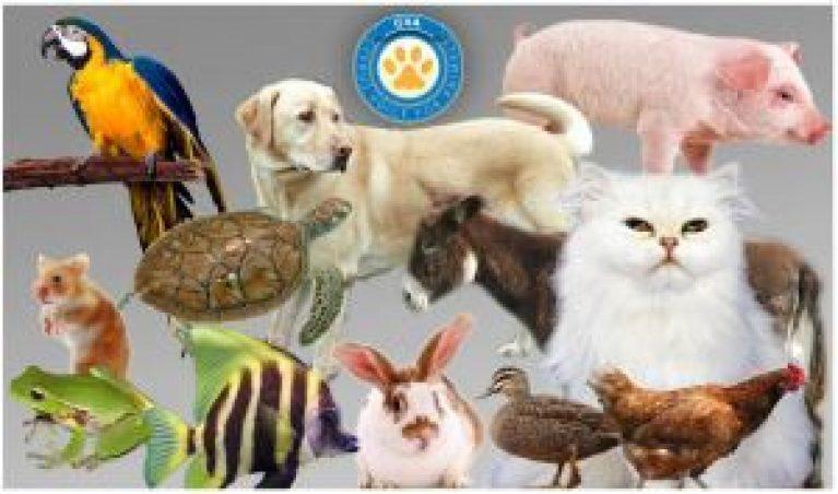 cva-cyprus-voice-for-animals
