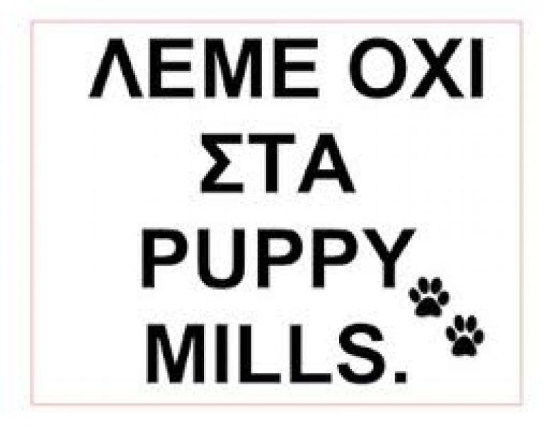 puppymils2