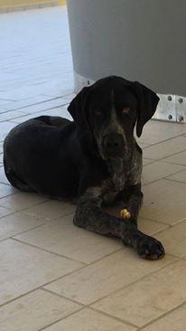 ο Μπρούνο,ένα από τα σκυλάκια που σώθηκε...