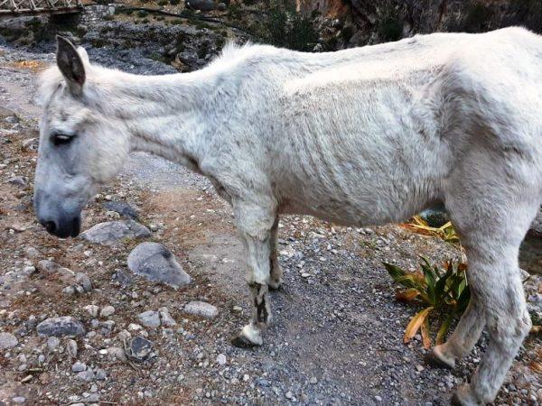 Porzucone muły